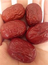 廠家供應新疆若羌紅棗批發價格圖片