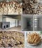茶樹菇烘干機#廣州金凱烘干設備#廠家直售
