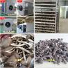 雞樅菌烘干,菌類烘干機,金凱熱泵烘干機,廣州廠家直售