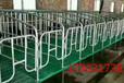 厂家猪哈哈养猪设备直销复合产床