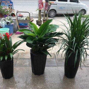 重庆室内植物租赁