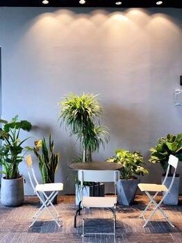 重庆写字楼植物租摆重庆办公室植物租摆重庆室内植物租售养护