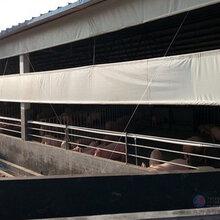 定制养殖场卷帘布加厚猪场卷帘布牛棚透光遮阳防雨布篷布图片