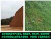 礦山綠化邊坡種草石景山草種噴播機