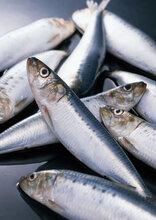 青岛进口报关代理公司冷冻海鲜进口清关专业快速