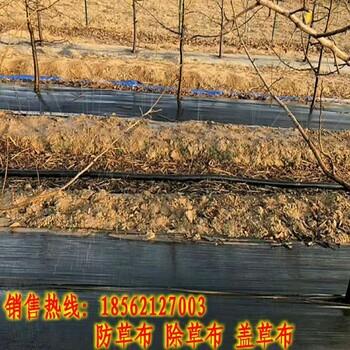 果园防草布保持土壤湿度,除草布保墒效果好防草布价格低