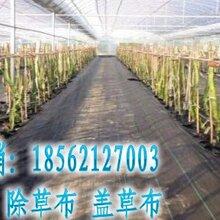 特价供应黑色抗老化防草布塑料编织园艺地布规格定制