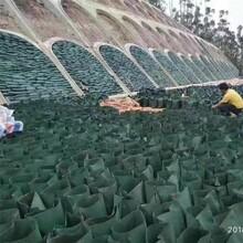 呼伦贝尔生态袋厂家规格齐全可定制植生袋源头厂家图片