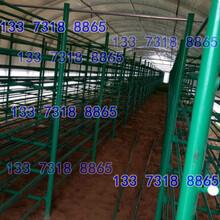 香菇培育架榆林市圖片