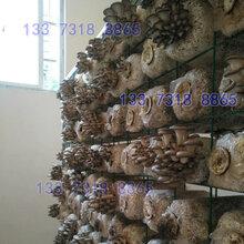 菌房专用蘑菇架草菇养殖层架栽培网架图片