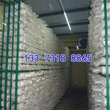 貴州平菇出菇網格架廠家操作圖片