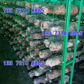 秀珍菇网格网架平菇出菇架子平菇网格架
