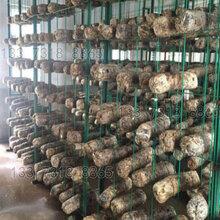 平菇出菇網格架食用菌出菇架蘑菇架子圖片