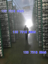 蘑菇架秀珍菇网格出菇网架图片