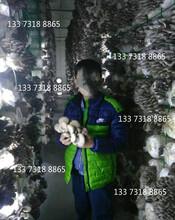 平菇出菇網架價格工廠化出菇架食用菌網架圖片價格圖片