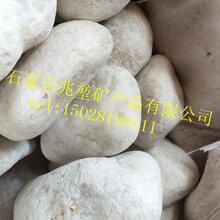 兆堃矿产品批发园艺机制石抛光鹅卵石量大优惠图片