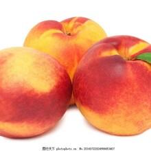 2019年5月大量桃子油桃多個品種成熟價格低廉物流便利歡迎大量采購圖片