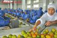 南平出国劳务保签零风险司机月薪3.5万新西兰急招工厂包装工