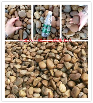 深圳鹅卵石生产基地各种规格齐全的鹅卵石鹅卵石原地