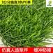 楼顶阳台装饰人造草皮3公分PE材质人工假草展览仿真草坪