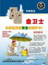 青年鸭病毒浆膜炎混感用金卫士和普尼克4天治愈图片
