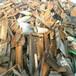 庐阳区H型钢U型钢回收-回收电话诚信报价