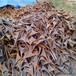 蜀山区钢罐板回收-免费估价24小时服务