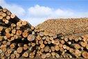 初次进口印尼木材原木报关细节指导图片