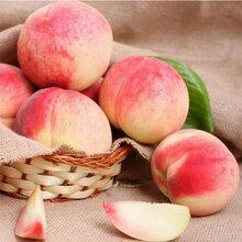日本桃子进口报关所需要的单证图片