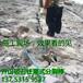 巴彥淖爾市臨河區分裂棒工地施工堅硬巖石開挖劈裂棒