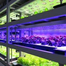 深圳植物灯厂家,全光谱植物生长灯,室内植物生长灯