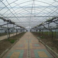 日光温室、光伏温室、PC板连栋温室、薄膜连栋温室、玻璃温室、生态餐厅、智能玻璃温室