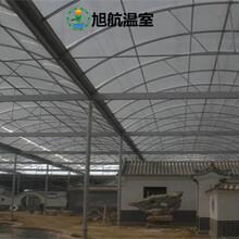 慶陽蔬菜薄膜溫室廠家直銷圖片