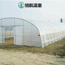 隴南蔬菜薄膜溫室廠家圖片