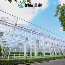 烏魯木齊中空玻璃溫室圖片