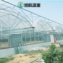 西安连栋种植温室厂家报价