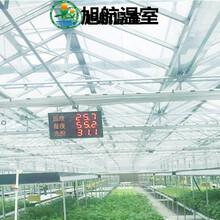 安康文洛式陽光板溫室大棚廠家報價圖片