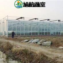 慶陽陽光板大棚廠家報價圖片