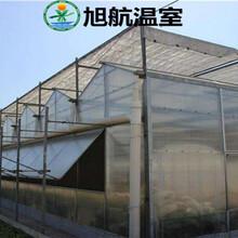 哈密自动化阳光板温室大棚厂家价格