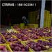 果園直銷特價批發一級甘肅花牛蘋果70mm有機新鮮水果蘋果批發
