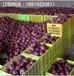 國產蛇果產地批發全紅花牛蘋果批發價格冷庫花牛蘋果便宜了