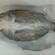 冷冻海鲈鱼