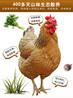 上海长宁区散养土鸡价格批发厂家