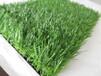 綠之洲人造草坪,優質幼兒園草坪,人工草坪廠家