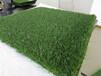 綠之洲人造草坪,優質幼兒園草坪,人造草坪廠家,人造草皮批發