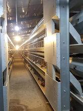 畜牧养殖机械喂料系统设备图片