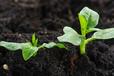 土壤调理剂价格_土壤调理剂生产厂家列表