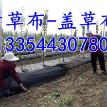 茶园铺设防草布的方法及防草布一平方的价格图片