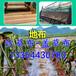 供應黑龍江防草布果園用2.5米寬度防草布