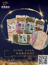 濟寧陽春面業訪圣谷道養生系列菠菜面條全國招商合作圖片